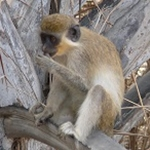 Whole genome sequencing reveals human-to-monkey disease transmission